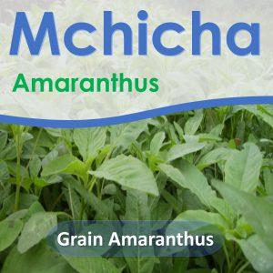 Amaranthus seeds: Grain Amaranthus
