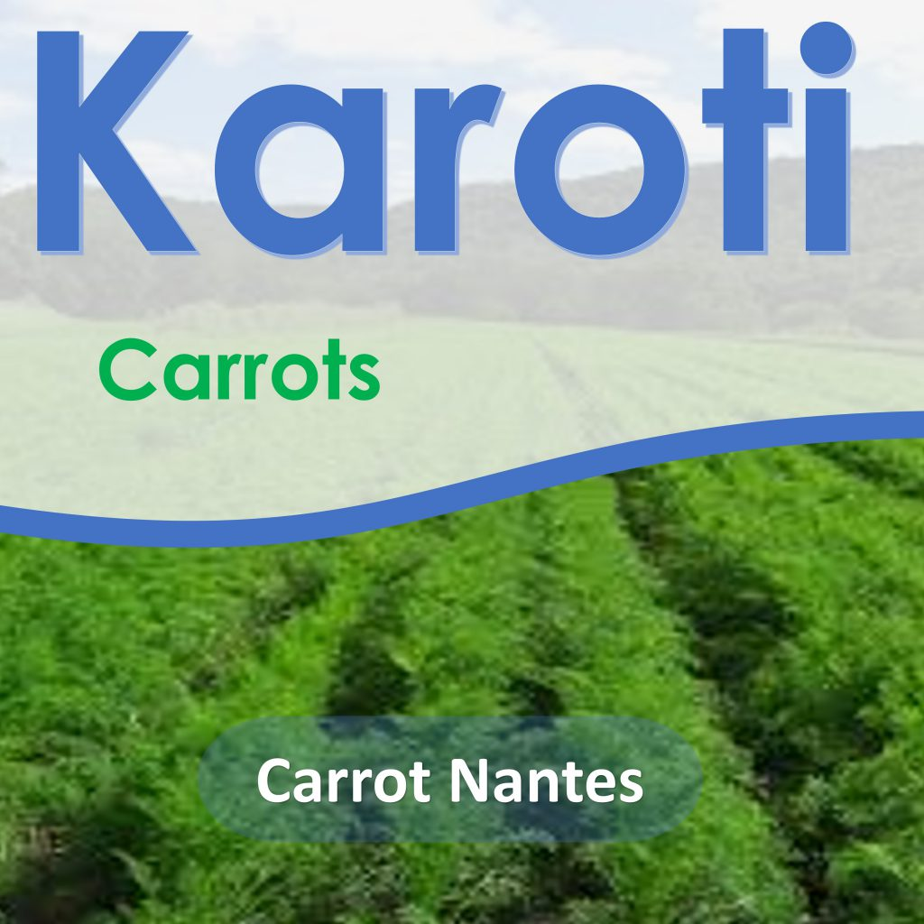 Carrot Nantes is an excellent variety which is bright red-orange medium sized roots with nearly core-less,  good texture and flavor