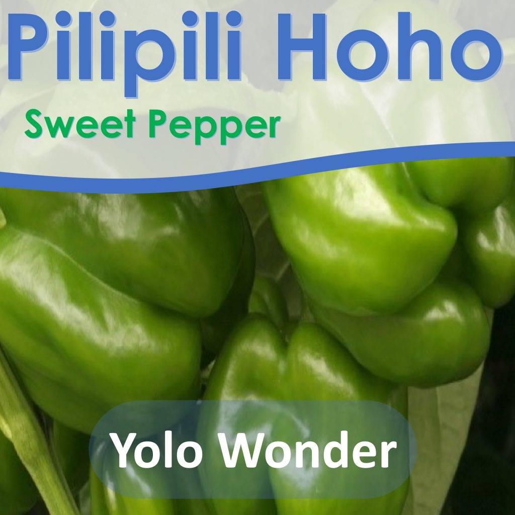 Sweet Pepper Seeds: Yolo Wonder