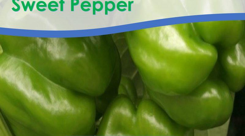 Sweet Pepper Seeds: Yolo Wonder