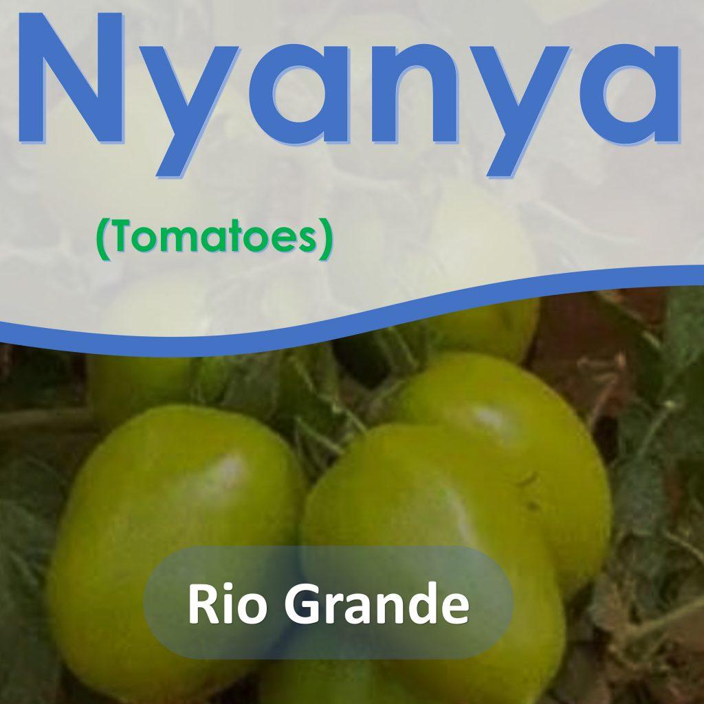Tomatoes Seeds: Rio Grande